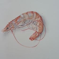 Cathy Ross - Shrimp