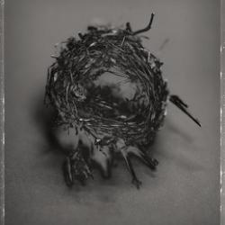 David Ellingsen - Cup Nest No.1