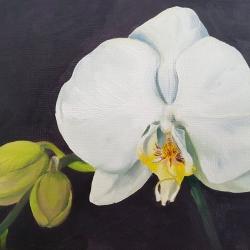 Emily Bickell - Phalaenopsis (black)