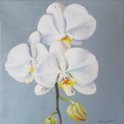 Emily Bickell - Phalaenopsis (square)