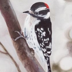 Emily Bickell - Downy Woodpecker