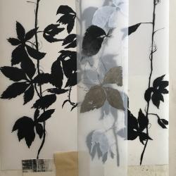 Michele Woodey - Botanical Folio1