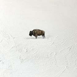 Heather  Cook  - On the Plains (Bison)