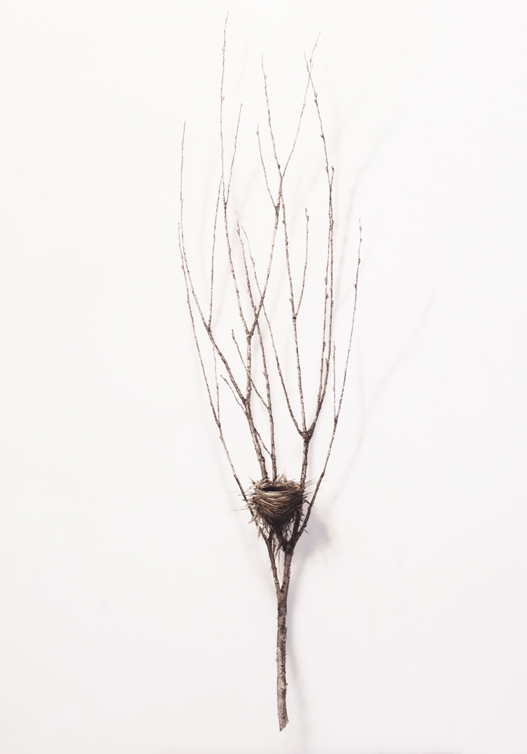 Untitled - Nest 1 by Dorion Scott