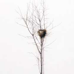 Dorion Scott - Untitled - Nest 2