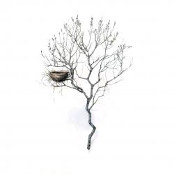 Dorion Scott - Untitled - Nest 3