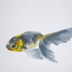 Agnieszka Foltyn - Goldfish 5