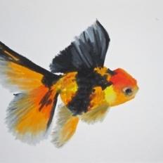 Agnieszka Foltyn - Goldfish 9