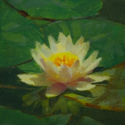 Caroline Ji - Waterlily 3