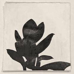 Meret  Roy  - Plant