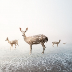 Alice  Zilberberg - Stay My Deer
