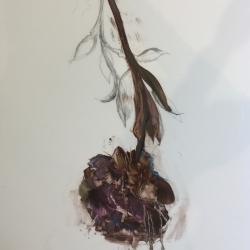 Madeleine Lamont - Purple Peony 2014