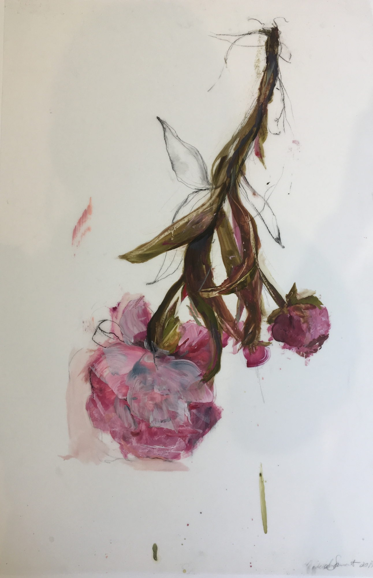 Pink Peonies 2016  by Madeleine Lamont