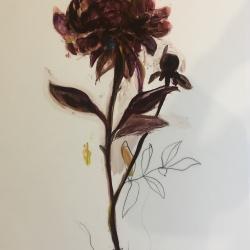 Madeleine Lamont - Dark Purple Peony