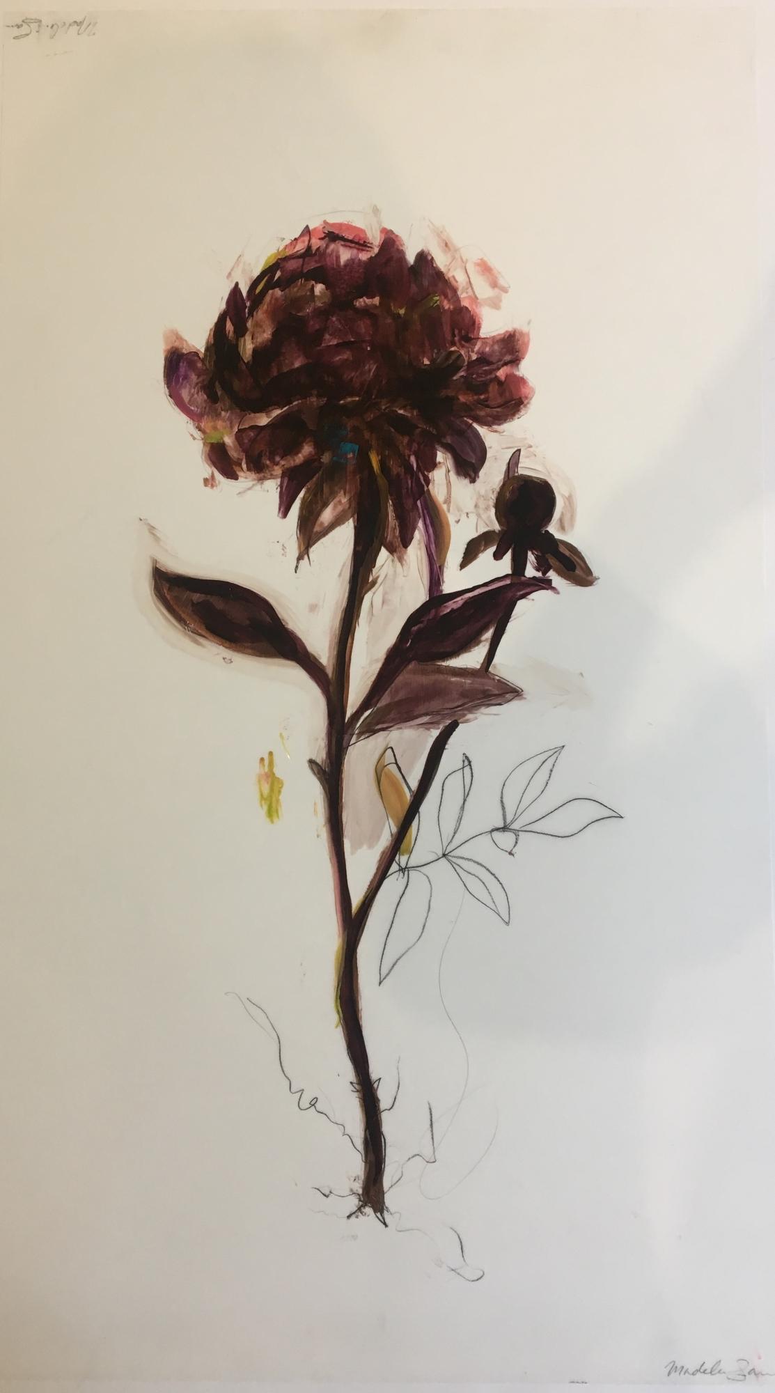 Dark Purple Peony  by Madeleine Lamont