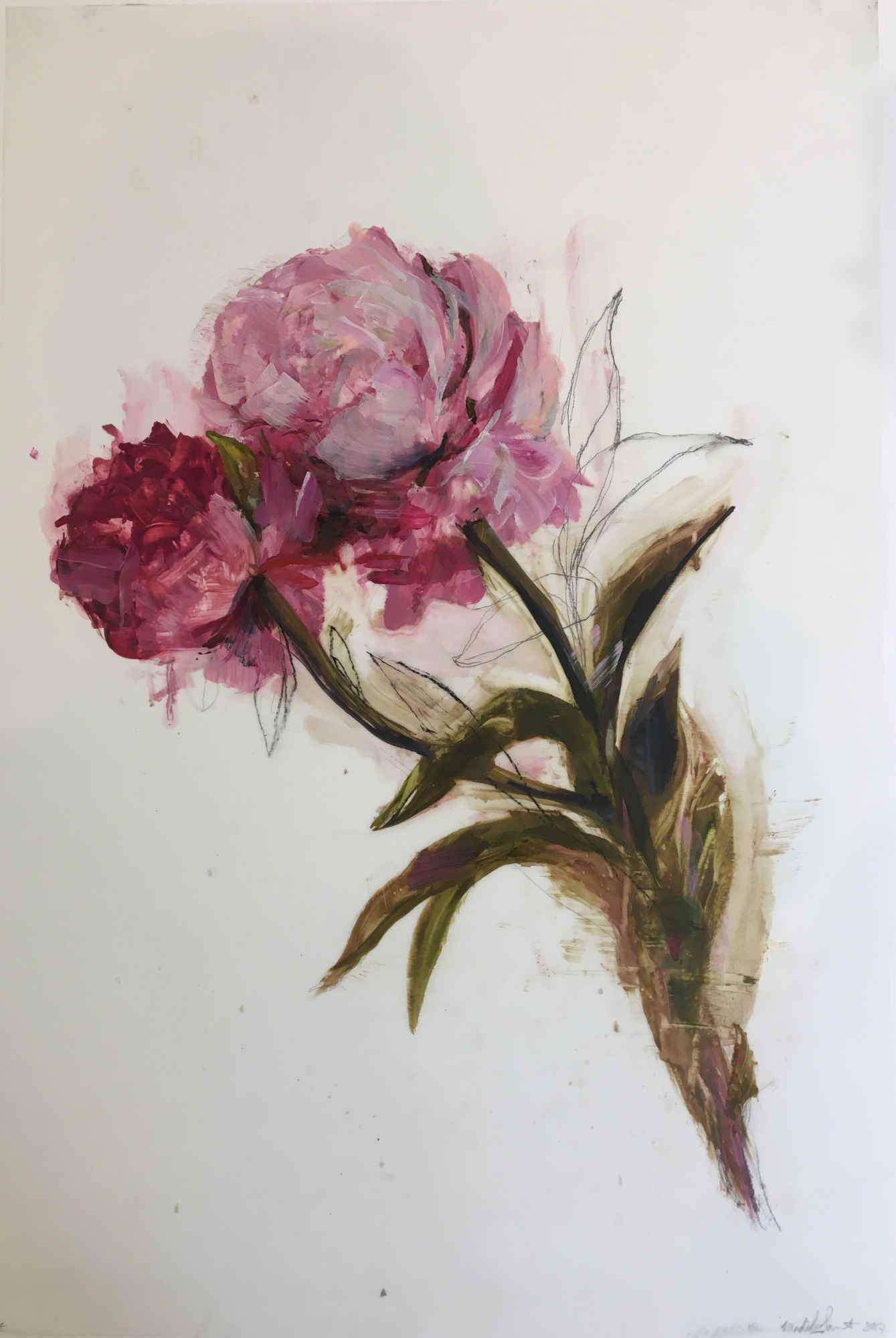 Pink Peonies 2017  by Madeleine Lamont