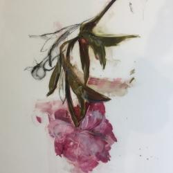 Madeleine Lamont - Pink Peony 2017