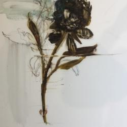 Madeleine Lamont - Dark Peony
