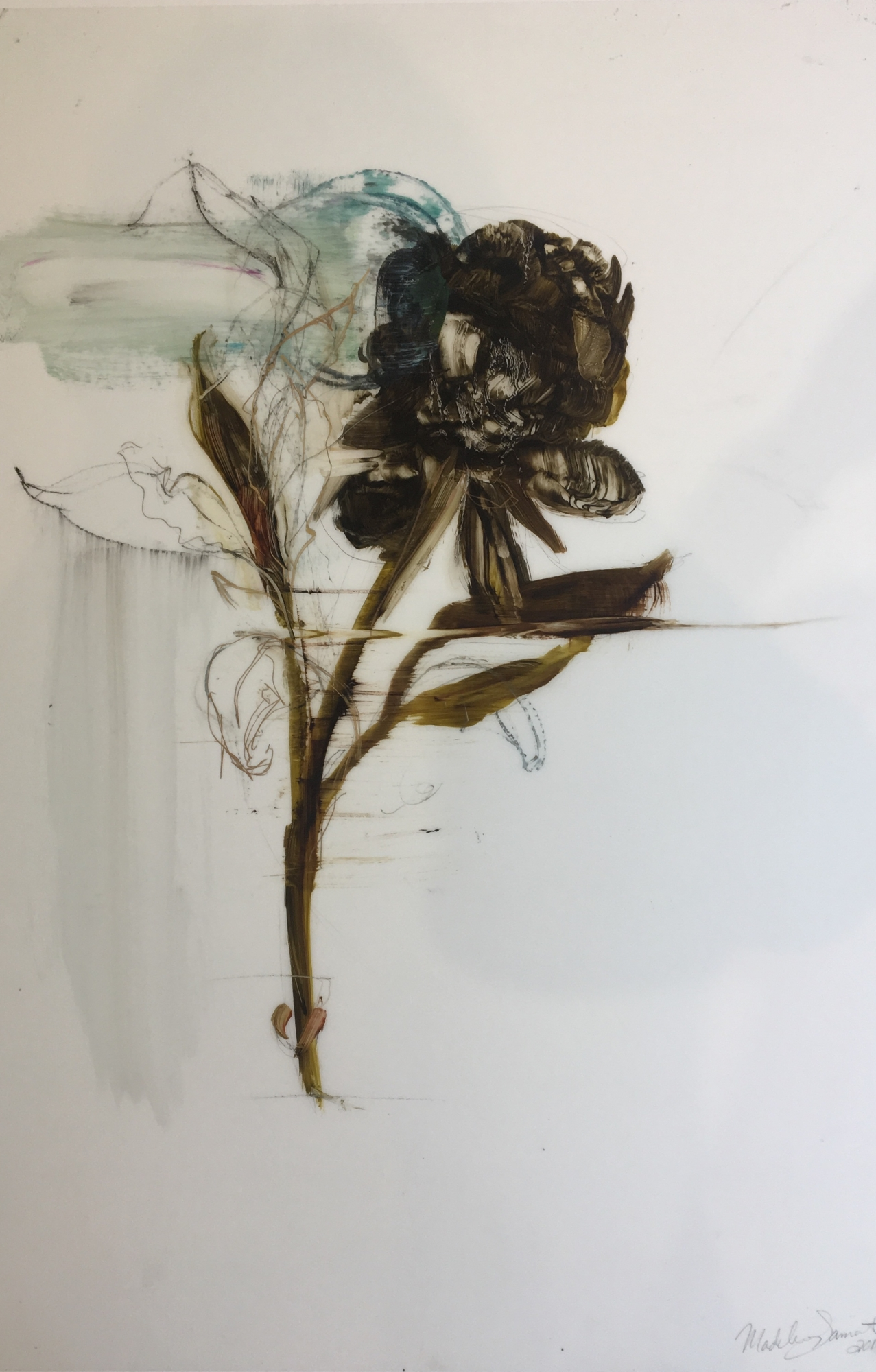 Dark Peony  by Madeleine Lamont