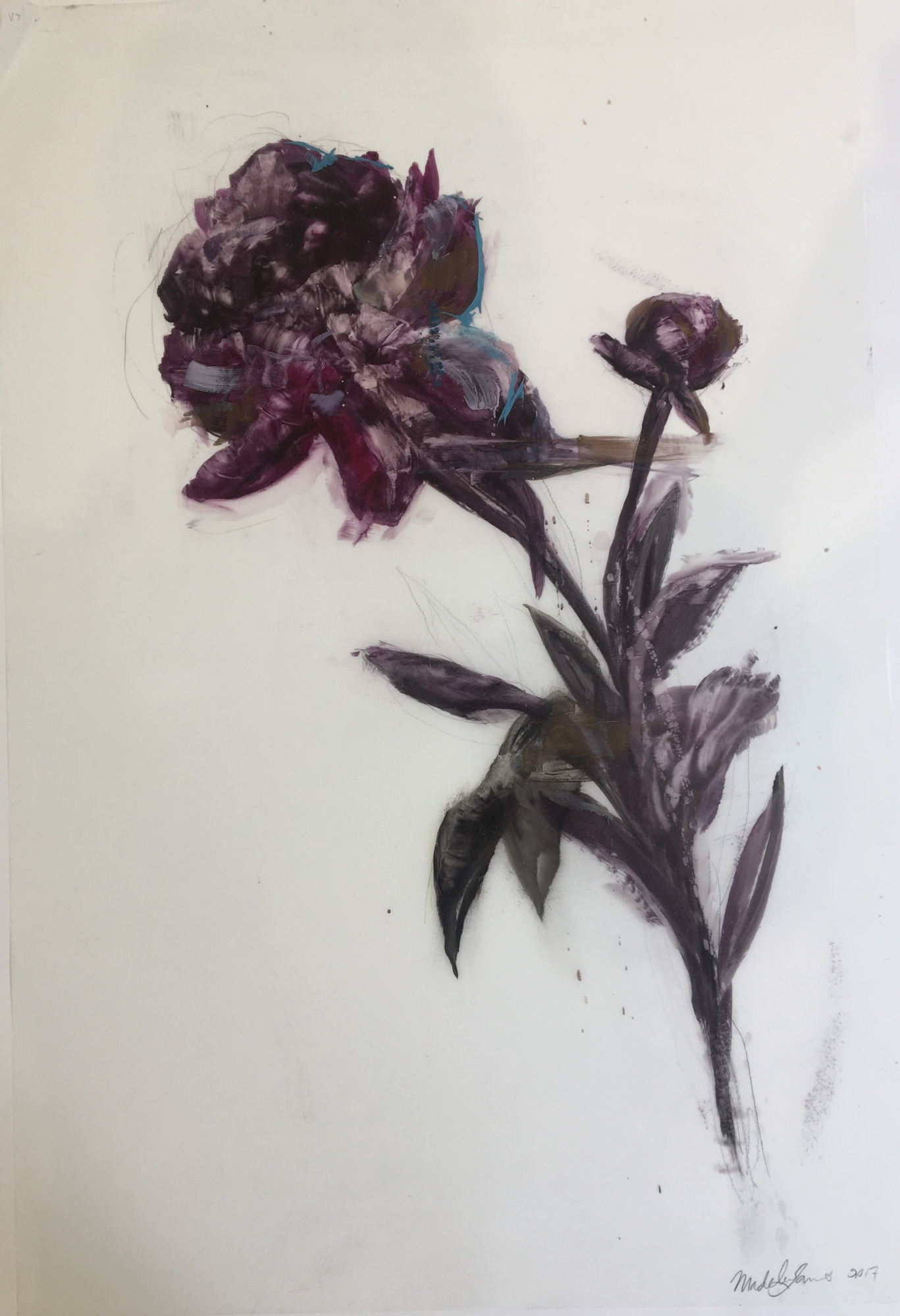 Purple Peony 2017  by Madeleine Lamont
