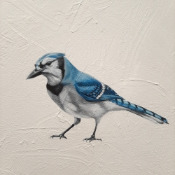 Heather  Cook  - Blue Jay
