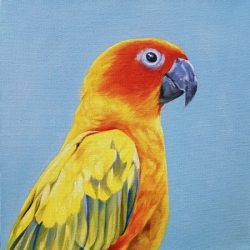 Emily Bickell - Conure