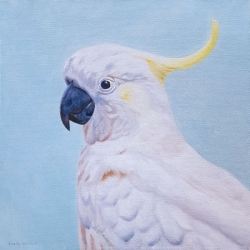 Emily Bickell - Cockatoo