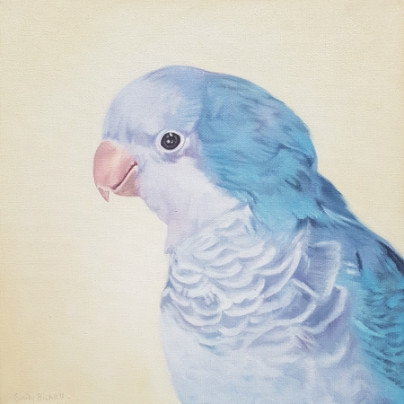 Blue Quaker by Emily Bickell