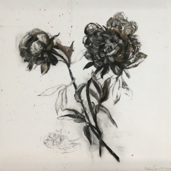 Madeleine Lamont - Black and White Botanical