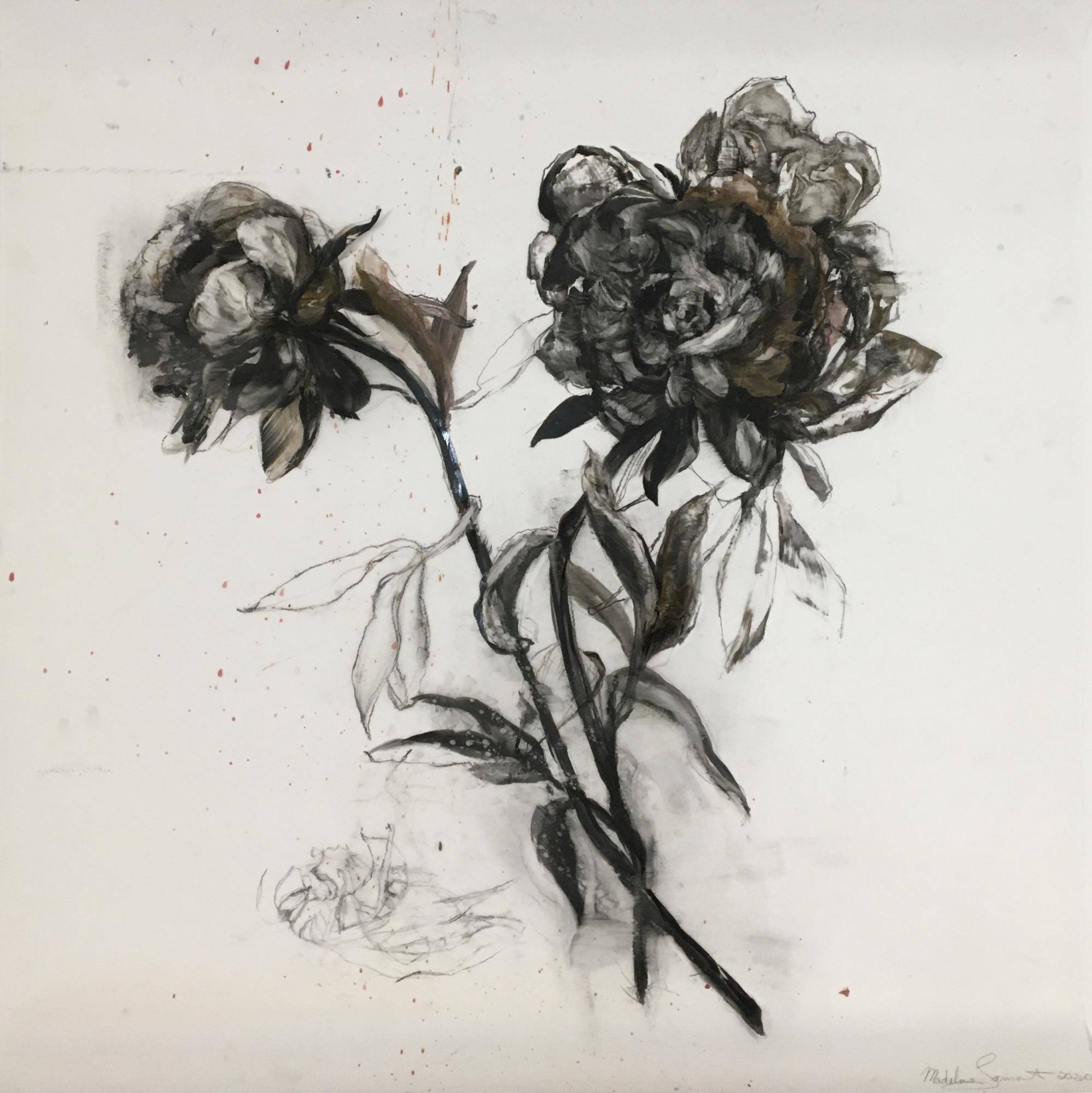 Black and White Botanical by Madeleine Lamont