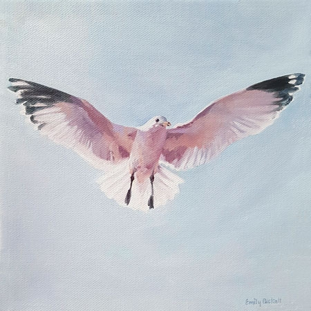 Pink Gull  by Emily Bickell