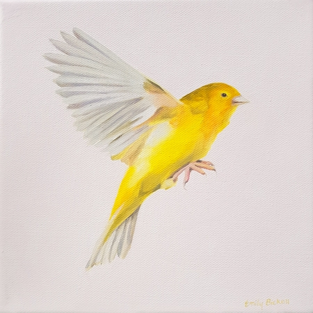 Canary  by Emily Bickell