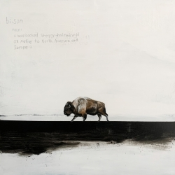 Heather  Cook  - Bison