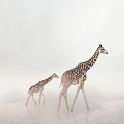 Alice  Zilberberg - Go Giraffe