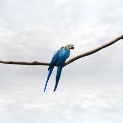 Alice  Zilberberg - Pondering Parrots