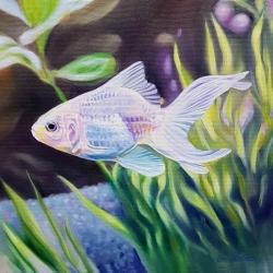 Emily Bickell - White Goldfish 2