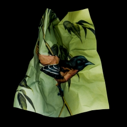 Amy Friend - Textbook Birds - Small Feats 1
