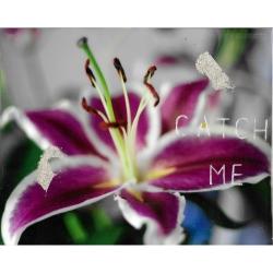 Talia Shipman - Catch Me