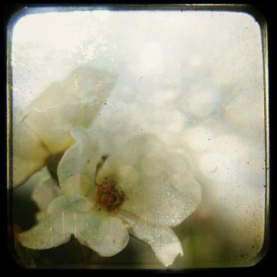 In a Rose Garden by Charlene Serdan