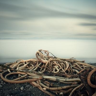 Salish Sea, Study 2 #59 by David Ellingsen