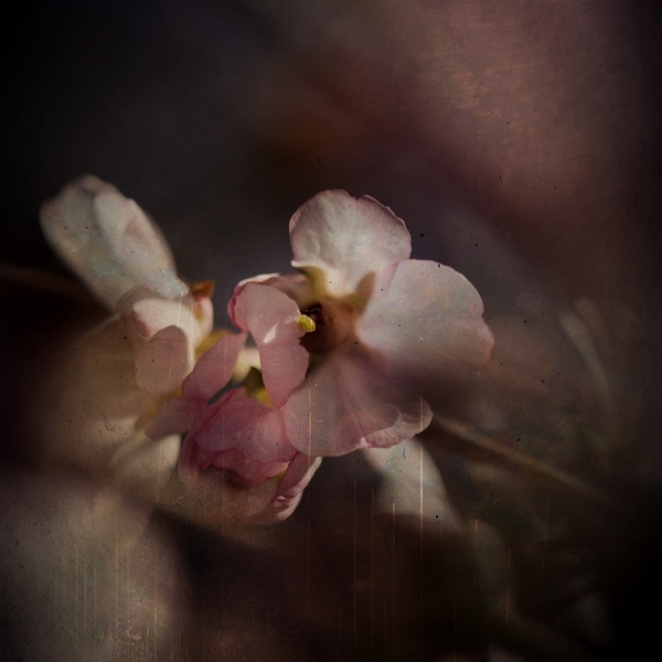 hello april 20 by Charlene Serdan