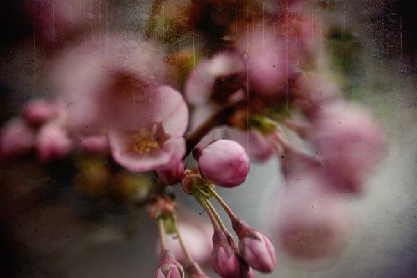 hello april 18 by Charlene Serdan