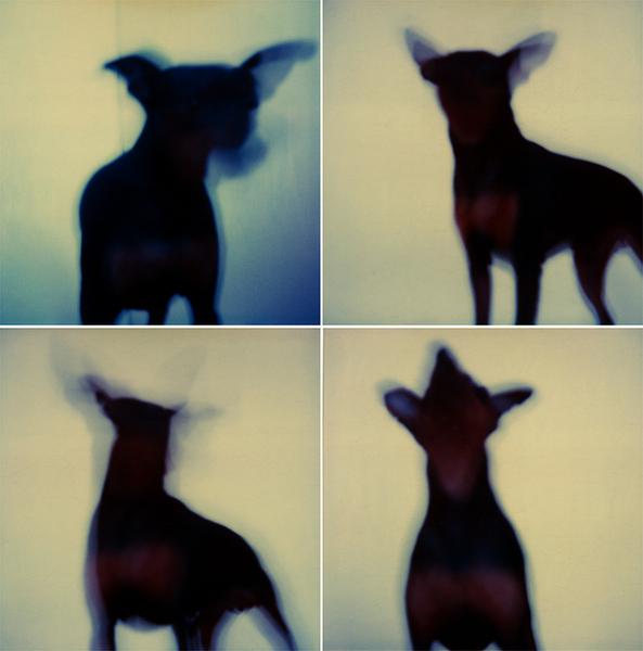 Dogs by Virginia Macdonald