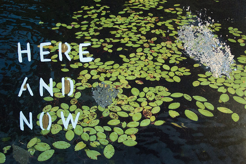 Here and Now by Talia Shipman