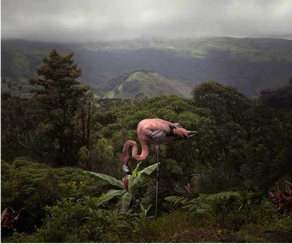 A Lost Flamingo Curious about a Flower	 by Pat  Swain