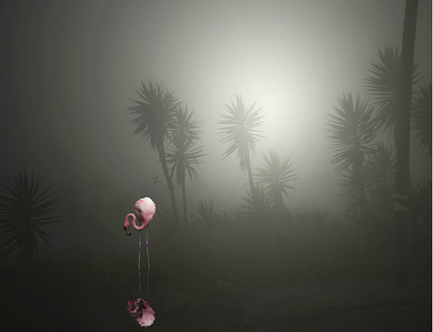 A Lost Flamingo on a Street in the Fog by Pat  Swain