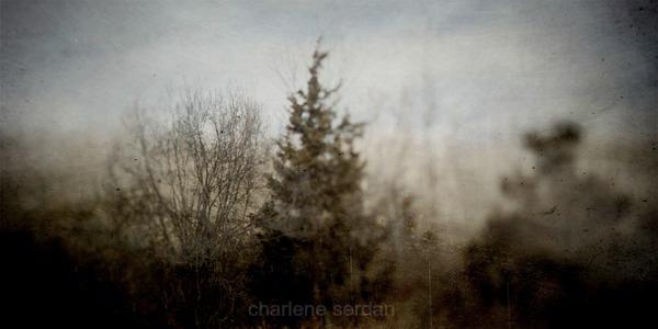 I dream of trees by Charlene Serdan