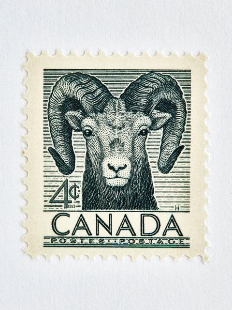 Wildlife Week Stamp- Ram by Peter Andrew