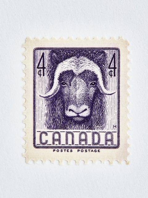 Wildlife Week Stamp- Ox by Peter Andrew