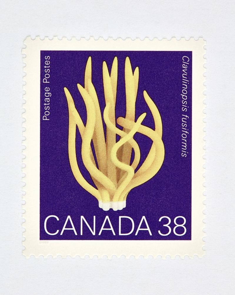 Canada 38 Mushroom Stamp (Purple) by Peter Andrew